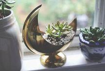Garden / for studio: succulents, fairies, buddha, sun, moon, stars.  Rest is for home.