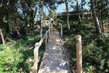 Treehouse heaven