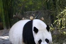 Pandas / Pandas