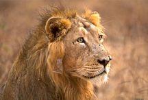 Voyage au Gujarat : Sasan Gir Parc national de Gujarat