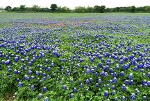 All Things Texas / The Lone Star State and things we love about Texas