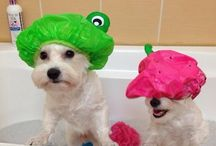Suds n Stuff - Grooming your pets / Tips on keeping your pet clean and healthy.