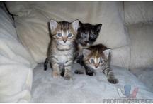Kočičky - cats / Obrázky koček a koťátek k prodeji