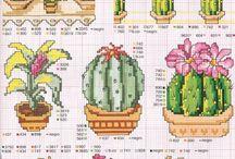 - H.K. kaktusy