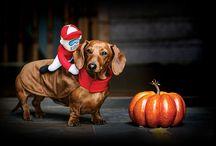 Scary Cute 2016 / Halloween @ Pet Valu