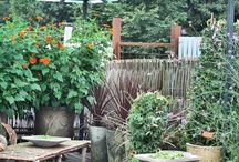 Årets trädgårdstema 2016