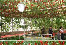 gradina fructe si legume