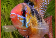 Freshwater beauties