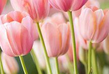 Çiçekler / by B.Aydın