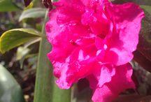 Flores! / Amo sus colores y aromas, pero por sobre todo, amo los tulipanes!