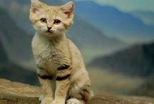 Gatti dolcissimi!!! :* / I gatti sono bellissimi!