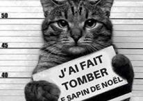 CHAT / PHOTOS DE CHATS