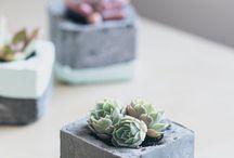 Garden - suculents /sukulenty a skalnicky