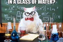 Chemistry Cat / Chemistry Cat