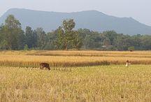 Deomali Peak of Odisha