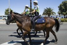 Horses in the Forces / Police Horses protecting our Communities