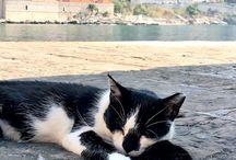 Animals abroad