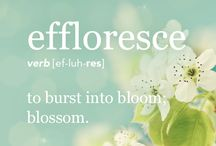 Quotes About Flowers / Our favorite quotes about flowers! www.BlossomFlower.com