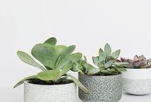 Succulentes idées / #plantessucculentes. #respireduvert. #frais.