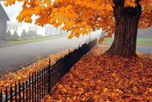 fall ~ thanksgiving / by Pam Reidhead