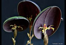.orchids.