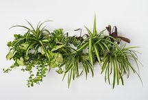 Zeleň nejen v interiéru