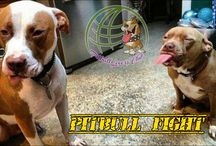 Pitbull Lovers Club