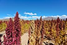 Meet the farmers in Bolivia / by FAIR.™
