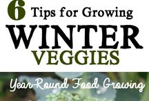 """Gardening / Earla Clark with Keller Williams Realty and the Triad Connections Team invites you to share and """"follow"""" these Gardening tips and planning ideas. Have something to share with us? Send it over! 336-306-0448 / earlaclark@kw.com"""