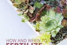 Fertilizer for succulents