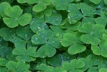 HOLIDAYS-St. Patrick's Day / by Kathleen O'Connor
