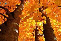 Autumn / by Brenda Morris