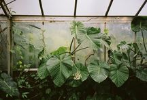 Inspiration - greenhouses / I have a lovely glasshouses