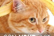 CAT Nutrition / We all want the best for our pets, and that includes giving our cats the best choices for proper nutrition. This Cat Nutrition board will be filled with tips, tricks, recipes, pet food product reviews, and the like.