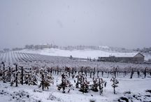 Snow Day at Leoness Cellars / One magical day it snowed in Temecula CA this is the AMAZING view our vineyards turned into!  See more at  https://www.facebook.com/pages/Leoness-Cellars-Winery / by Leoness Cellars