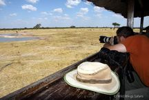 Hwange National Park / One of the jewels of Zimbabwe, known for its huge herds of buffalo and elephant