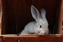 All about rabbits / Cute and ever so soft. We raise both Angora and English rabbis on our homestead.