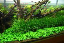 Ideeën Aquarium