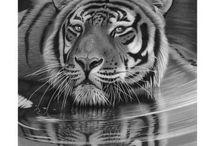 Lion schwarz weiss