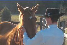 Teaching an Old Horse...