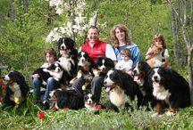 bovaro del bernese / il più dolce cane del mondo www.casabovary.it