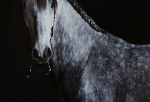 Horses, I love.