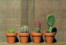 Paisagem / estruturando jardins em lcais pequenos...