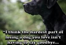 dog quotes / what the dogs say to us!!!!!!!!!!!!!!!!!!!