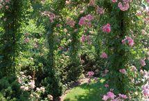 giardini e patii