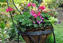 flower ,plants