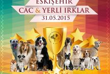 Carmielo Ephesus Black ESKİŞEHIR DOG SHOW 31-05-2015 / Carmielo Eskişehir Show Excellent CAC Tr. 20 month old Intermediate Class 1.