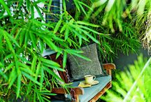 Outdoor Spaces / All the things I want in my dream backyard