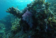 Fiji, diving