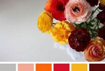 Color Schemes / by Mary Oyler
